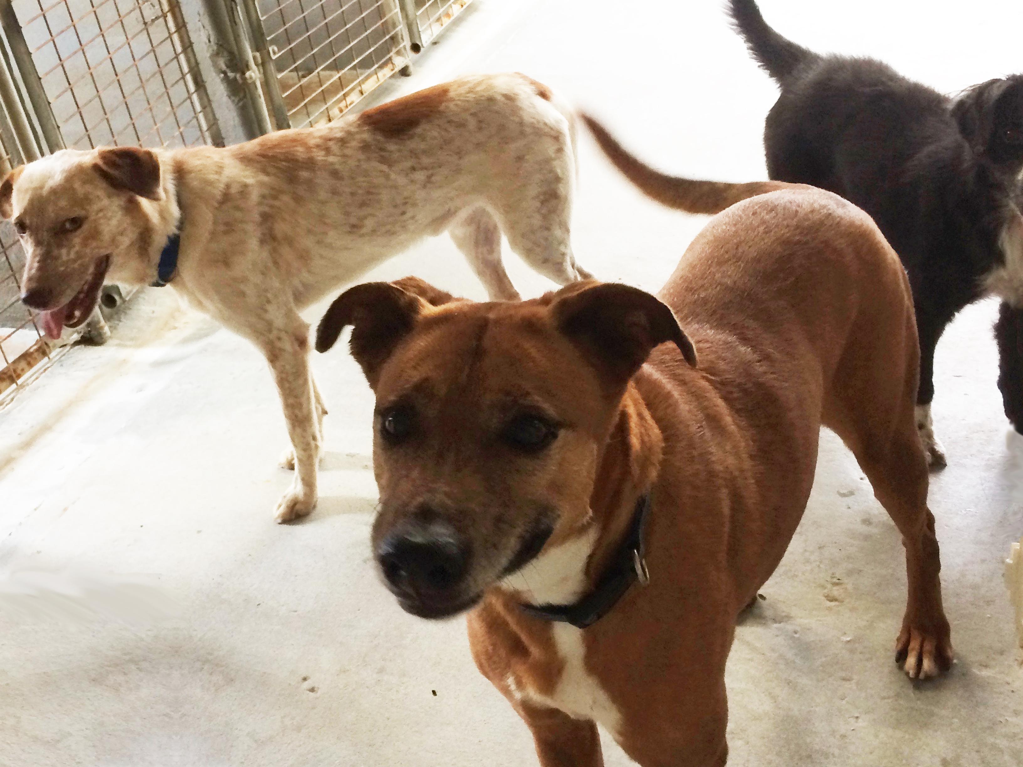 Animal control dogs
